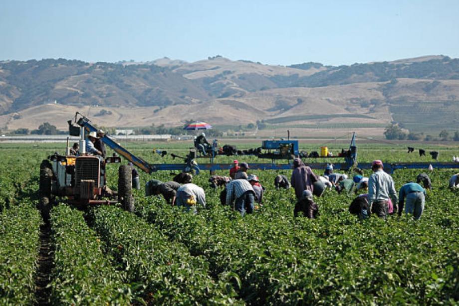 Sakarya'da Tarım İşçileri Göz Göre Göre Öldü