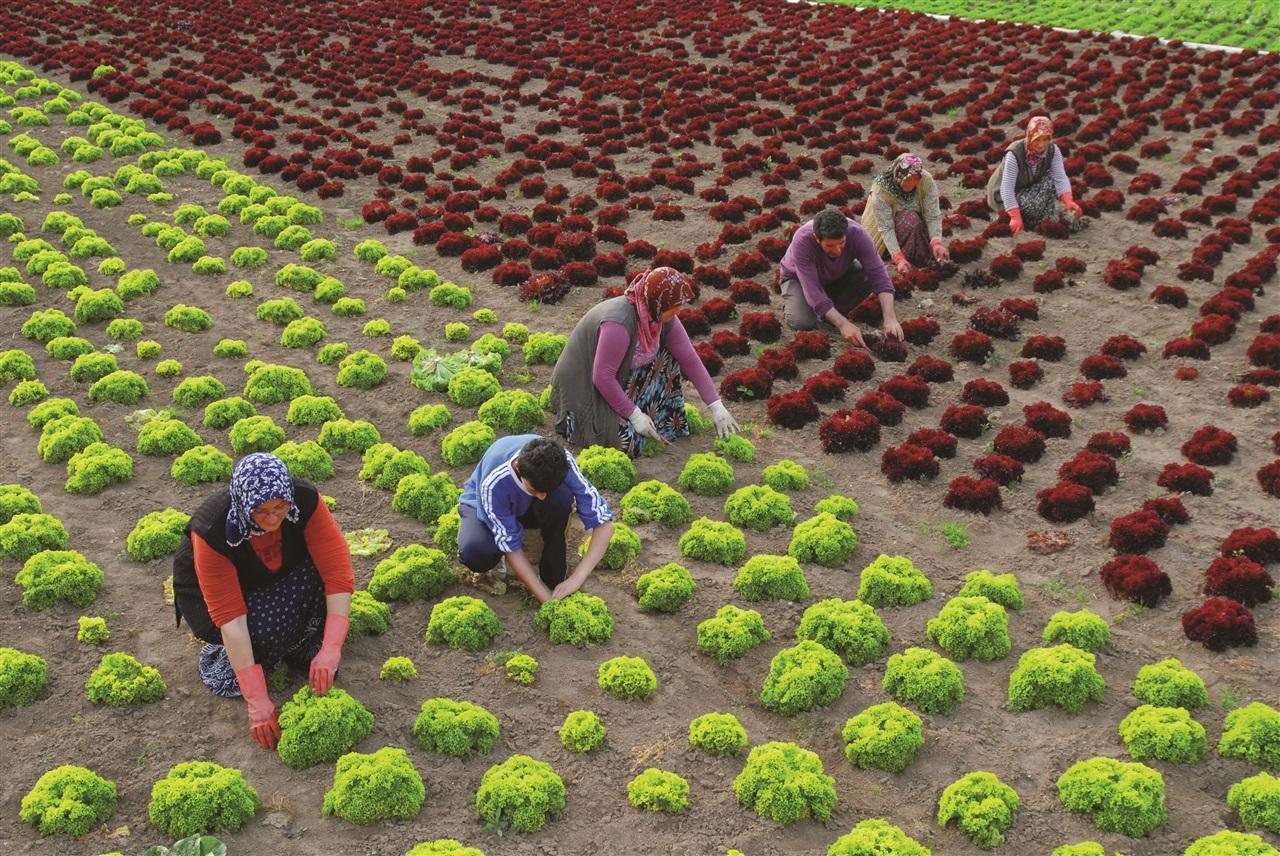 Çiftçi Olmadan Karnımız Doymaz
