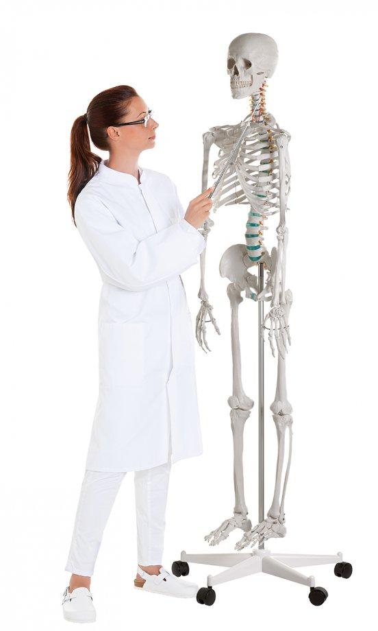 "Didactic skeleton ""Oscar"""
