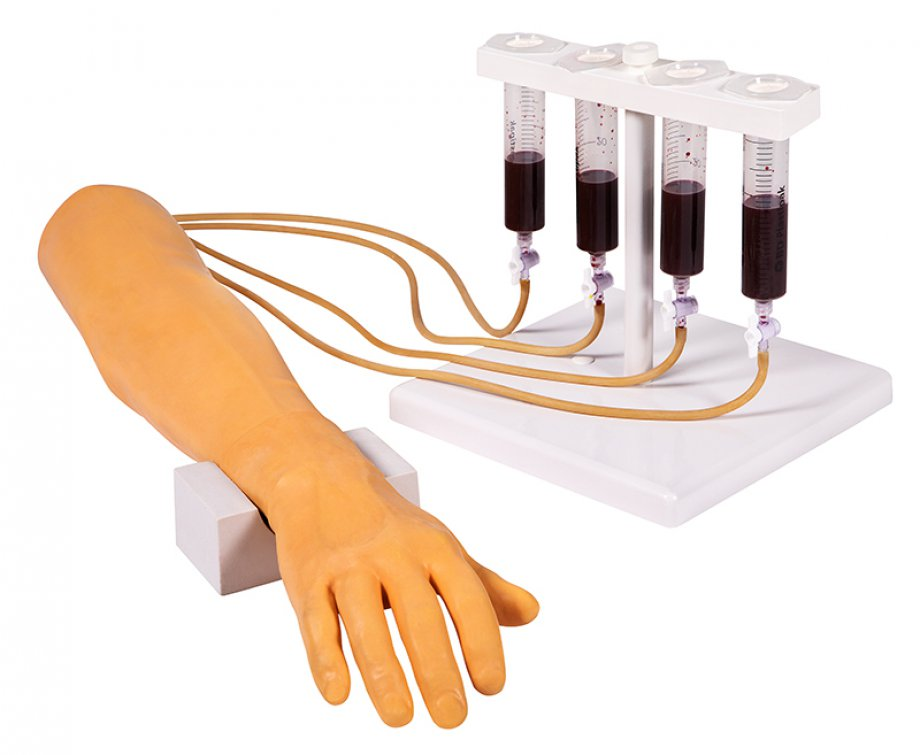 Training arm for intravenous injection and infusion